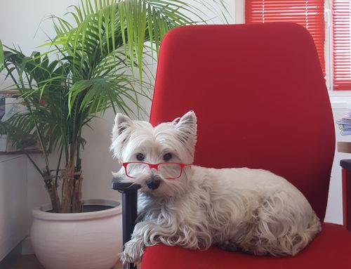 Llevar a tu mascota a trabajar, tiene muchos más beneficios de los que piensas…